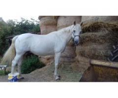 Biete Pflegebeteiligung (Pferdeflüstern/Horsemanship)